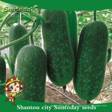 Suntoday surtido de híbridos vegetales de plántulas vegetales F1 botella de jardín semillas de calabaza de cera chieh-qua (19005)