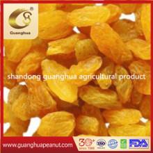 High Quality Golden Jumbo Raisins