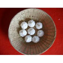 Neuer Ernte Normaler weißer Knoblauch Chinesischer Lieferant