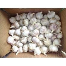2020 Hot Sale Normal White Garlic