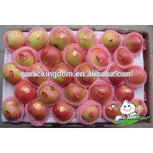 Nueva cosecha roja gala / venta caliente rojo Gala manzana / Gala manzana