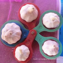 Alho branco normal de qualidade superior com bom preço