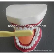 Modèle de soin dentaire médical de style nouveau, modèle de brossage dentaire