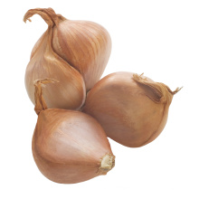 Chinese shallot in Bulk New Crop Best Fresh natural shallot for wholesale