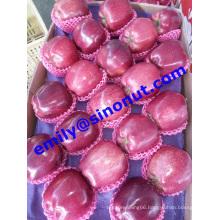 Apple Fruit Huaniu