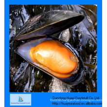 perfect frozen half shell mussel low price