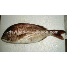 Peixes pretos do Seabream