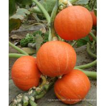 HPU05 Zhiji redondo naranja F1 semillas de calabaza híbridas