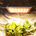 WENYI Plant Lamp Hydroponic Led Grow Light