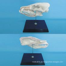 Hund Kopf Anatomie Skelett Modell für die Lehre (R190110)