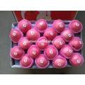 Verkaufe 2017 Fruit Fresh Fuji Apfel