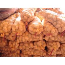 Pomme de terre fraîche jaune d'or chinoise