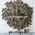 Hot Sale 5009 Big Size Sunflower Seeds
