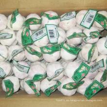 Nuevo embalaje de cartón de cosecha de ajo chino blanco