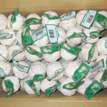 Alho chinês branco da embalagem nova da caixa da colheita