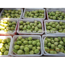 Neue Ernte Shandong Birne aus Ursprung