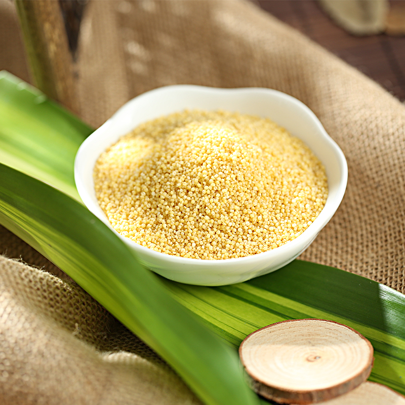 Top quality fresh yellow millet