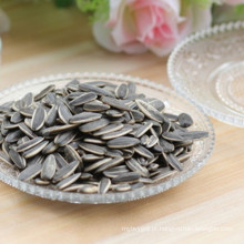 Wholesale semente de girassol de baixo preço