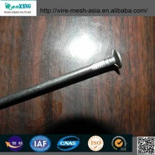 Polished Common Nails Flat Head Nail