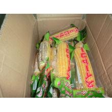 Best pricing Frozen IQF sweet corn cob
