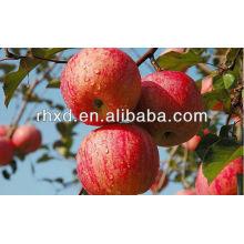 свежий красный Гала-Яблоко/яблоко Роял гала экспортер