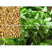 semillas de fenogreco Naturales