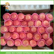 Formas Convencionais Cor Vermelha E Tipo De Maçã Tipo Chinês A Fresh Red Apples