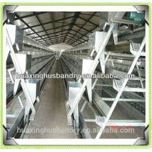 industrial chicken house of battery cage