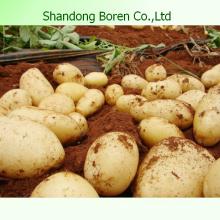 Gesundheit Lebensmittel Kartoffel Frische Lebensmittel Frische Kartoffel