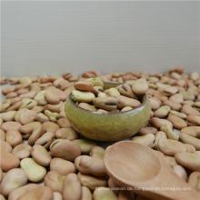 Hohe Qualität getrocknete Saubohnen für Dosen Bohnen mit unterschiedlicher Größe