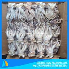 Fournisseur de tenture de squid et de squid congelés de haute qualité