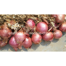 2015 Red Onion