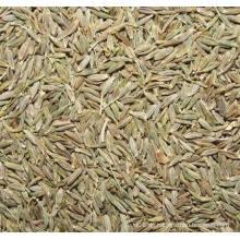 2015 Neue Ernte gesunde (ISO) Kreuzkümmel-Samen