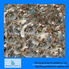 New high quality new mud crab seafood
