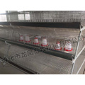Automatische Pullet Chicken Cage eines Rahmens mit Zertifikat von ISO9001