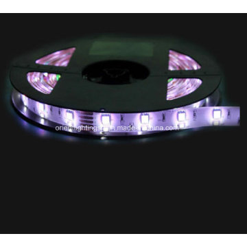 SMD 5060 + 2835 RGB + W Faixa Flexível-96 LEDs / M