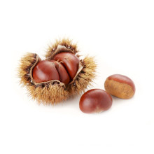 2021 New Harvest Export Natural Hot Selling Good Chinese Fresh Chestnut