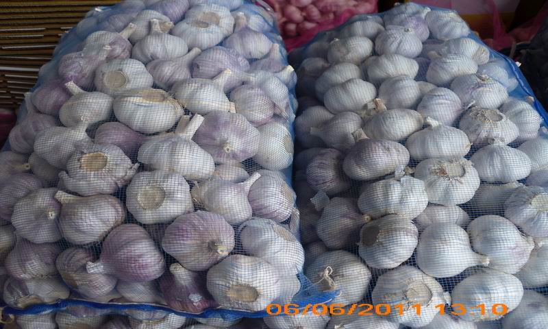 garlic packed in mesh bag