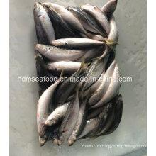 Рыба свежемороженая скумбрии