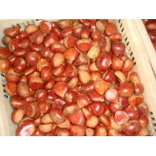 Best Quality Chestnut