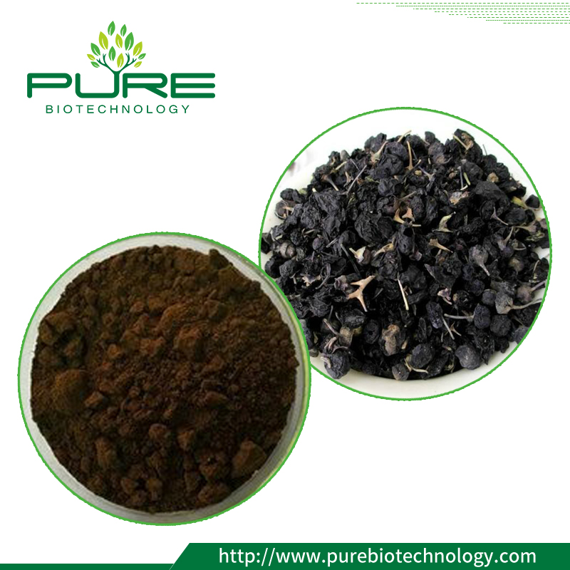 Black Goji Berry Extract Powder/ Black Wolfberry Extract