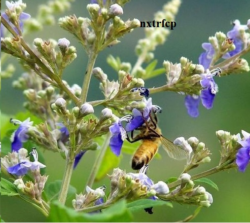hot sale raw organic vitex bee honey