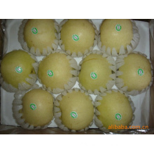 New Crop Exporting Standard Golden Pear