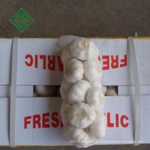 Top neue Ernte frischen natürlichen reinen weißen Knoblauch Lieferanten
