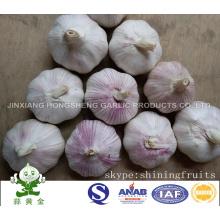 Frischer normaler weißer Knoblauch Jinxiang Hongsheng Knoblauch Produktfirma