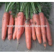 MCA07 Gaoji maturité précoce op graines de carottes rouges pour la plantation