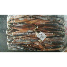 Calamares congelados frescos