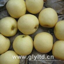 Ya Poire, Golden Pear, Poire de la Couronne Nouvelle Culture