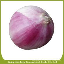 Fresh red onions para venda