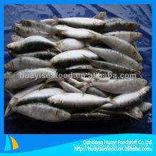 high quality frozen sardine pacific sardine
